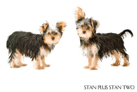 stan-plus-stan-two-dog-and-pet-photography10