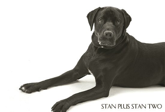 stan-plus-stan-two-dog-and-pet-photography11