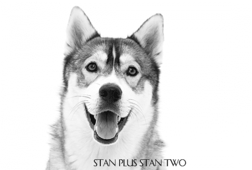 stan-plus-stan-two-dog-and-pet-photography16_1