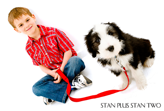 stan-plus-stan-two-dog-and-pet-photography17