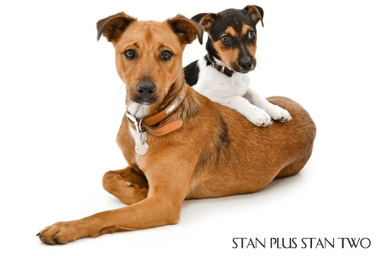 stan-plus-stan-two-dog-and-pet-photography18