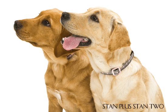 stan-plus-stan-two-dog-and-pet-photography5