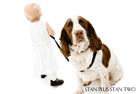stan-plus-stan-two-dog-and-pet-photography6