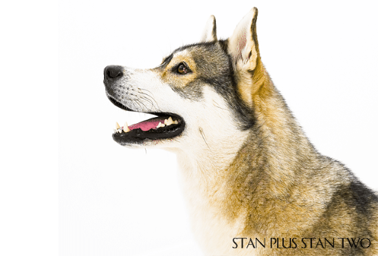 stan-plus-stan-two-dog-and-pet-photography7