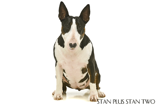 stan-plus-stan-two-dog-and-pet-photography9