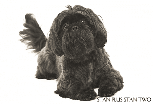 stan-plus-stan-two-dog-photography