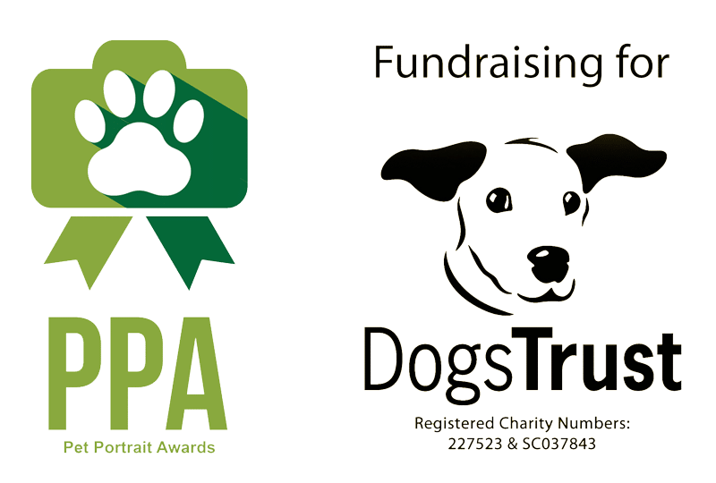 Pet Portrait Awards & DogsTrust